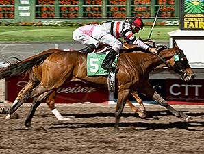 Highway Boss wins the Everett Nevin Stakes.