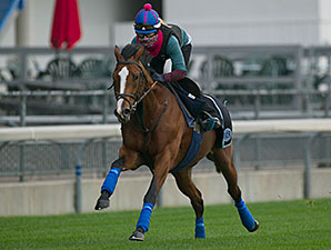 Hillstar - Woodbine, October 17, 2014