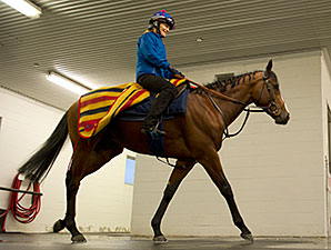 Hillstar preps for the Pattison Canadian International.