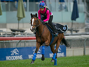 HIllstar - Woodbine, October 16, 2014.