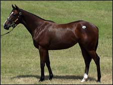 Rainmaker Filly Tops Fasig-Tipton Texas First Session