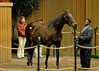 Glasgow's Gold Second Horse to Fetch $300,000