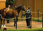 Keeneland November Sale: World-Record Price; Running Notes