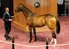 Medaglia d&#39;Oro Filly Fetches $425,000 at FTK