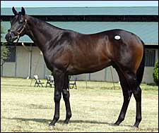 $330,000 Pleasant Tap Colt Helps Boost Texas Yearling Sale Numbers