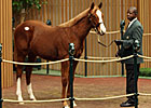 Distorted Humor Colt Tops First-Day Yearlings