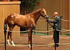 Maria&#39;s Mon Colt Brings $525,000 at Keeneland