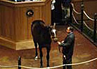Topped by Malibu Moon Colt, Fasig-Tipton Concludes With Decline in Average