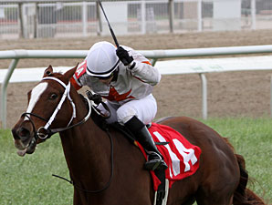 Hisse wins the 2011 Red Camelia Stakes.