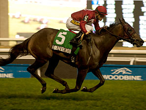 Hobnobsnob wins the 2013 Victoriana Stakes.