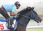 Dubai World Cup: March 28 Morning Training