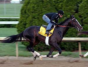 Hold Me Back Shines in KY Derby Workout