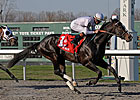 Hold Me Back Favored in KY Cup Classic