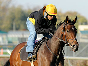 Holiday for Kitten, Churchill Downs, October 29, 2011.