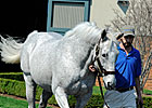 Stallion Holy Bull Pensioned