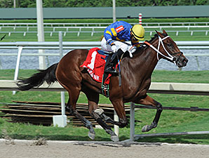 Holywell wins the 2014 Florida Sire My Dear Girl Stakes.