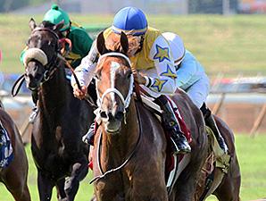Honey Hues wins the 2014 Ellis Park Turf Stakes.