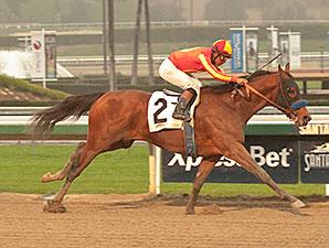 Hoppertunity - Maiden Win, January 30, 2014.