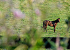 Tickets Available for KY Horse Farm Tours