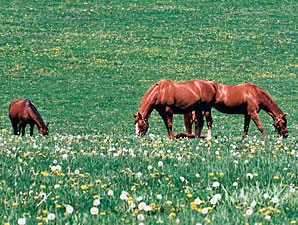 New York Equine, Ag Interests Form Alliance