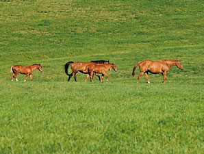 Study Documents Equine Industry Impact in NY
