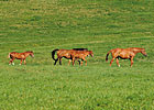 KY Equine Receipts Projected to Rise in 2013