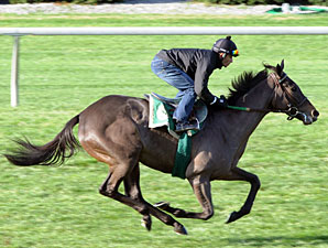 Hot Cha Cha works at Keeneland on October 30, 2010.