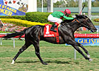 Howe Great Shows He&#39;ll Rate in Palm Beach Win