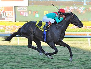 Howe Great wins the 2012 Kitten's Joy.