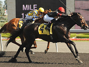 Hunters Bay Handles Distance in Dominion Day