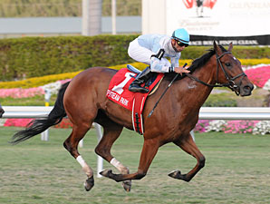 I Lost My Choo wins the 2009 Honey Fox.