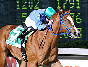 Ide Be Cool wins the 2014 Pelican Stakes.