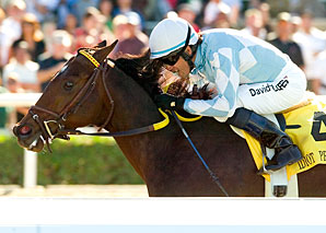 Grade I Winner Idiot Proof Retired to Stud