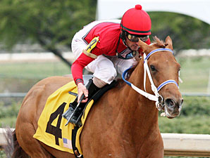 Ile St. Molly wins the 2013 Rainbow Miss Stakes.