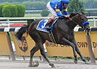 Indian Blessing Scratched From Ruffian