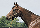 Stakes Producer Soviet Sojourn Euthanized