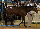 Black Caviar&#39;s Half Sister Brings $2.6M