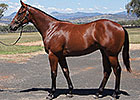 Uncle Mo Yearlings in Demand at Inglis