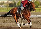 Inglorious Leads Woodbine Oaks Lineup