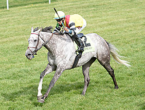 Inimitable Romanee wins the 2014 Bewitch Stakes.