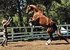 Inside Track: World's Smartest Horse