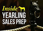 Inside Yearling Sales Prep: Exercise