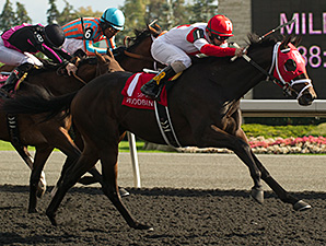 International Star wins the Grey Stakes.