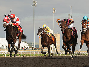 International Star in the Grey Stakes.