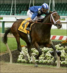 Classic Contender Invasor Nominated to BC Program