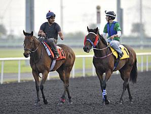Invincible Ash (left) and Ocean Park - Dubai, March 26, 2013.