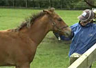 Irish National Stud (Video)