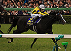 Trio of Top Contenders Set for Japan Derby