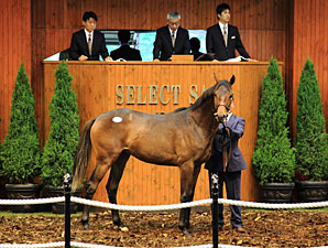 Record Gross for JRHA Yearling Sale