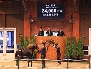 Azeri Foal by Deep Impact Tops JRHA Sale